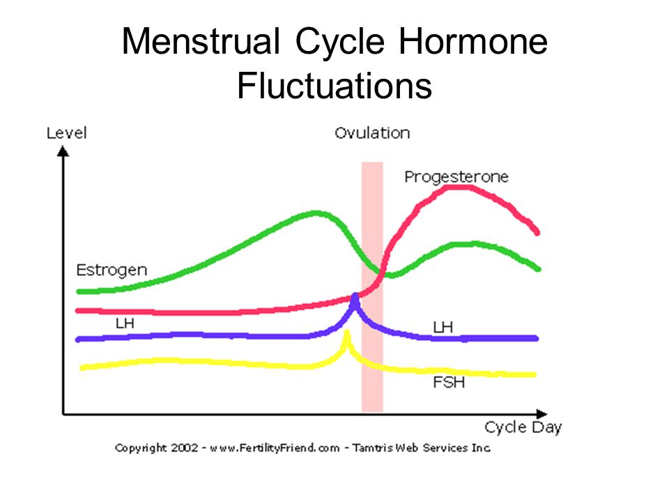 stages of the human menstrual cycle