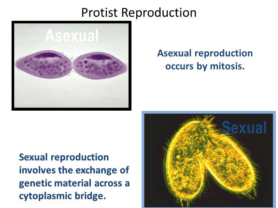 Contrast sexual and asexual reproduction in fungi