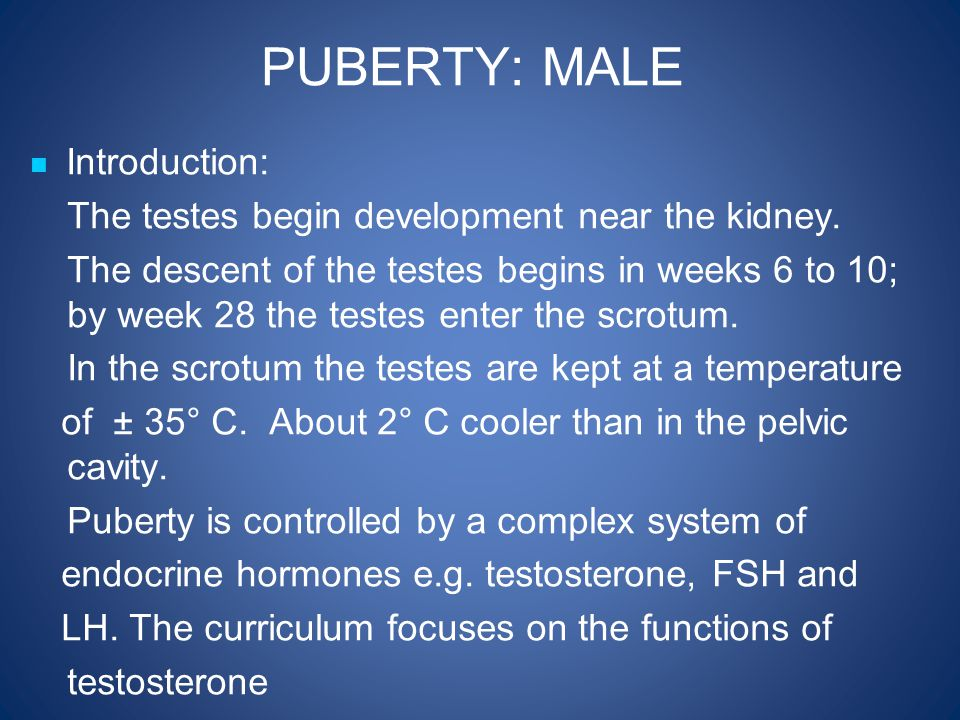 puberty stages in male and female