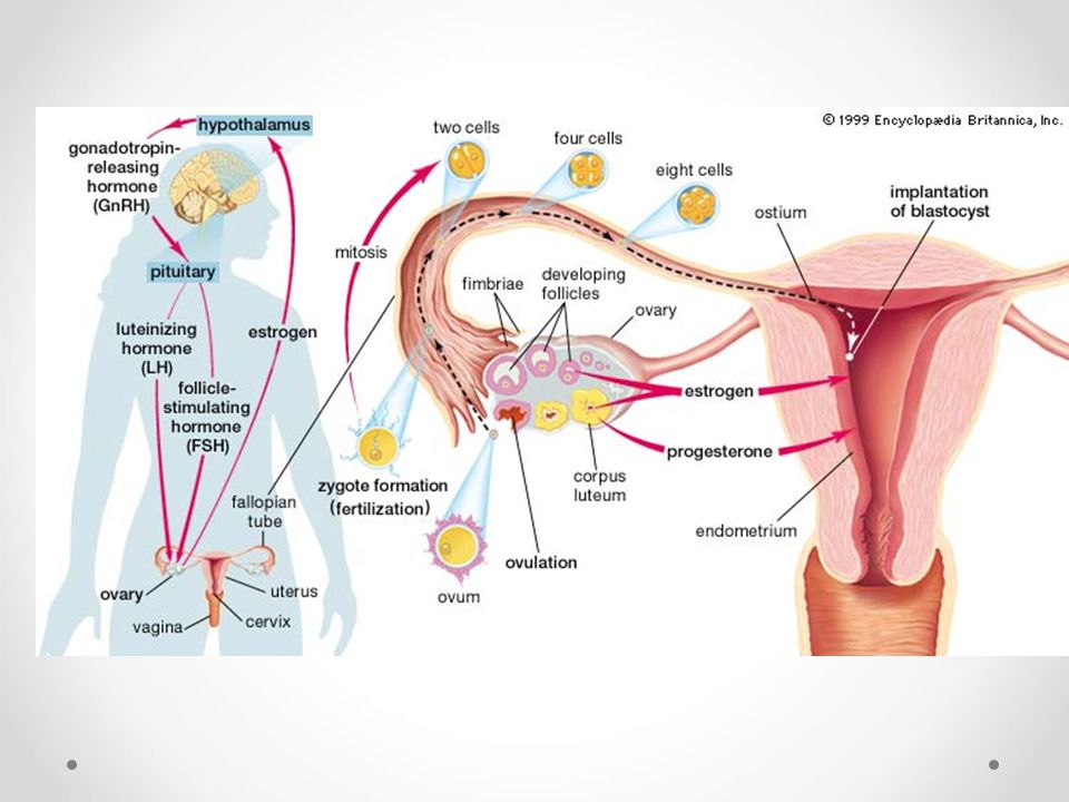 Female Reproductive System Male Reproductive System Ppt Video