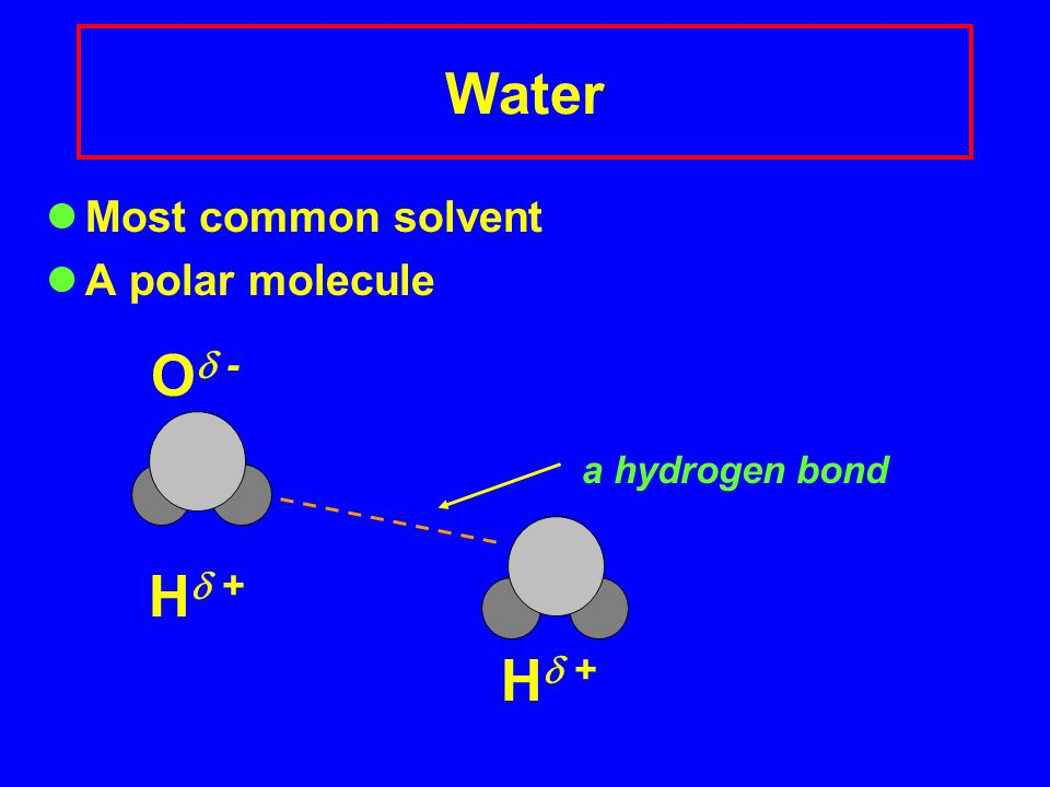 Water Most common solvent A polar molecule O  - a hydrogen bond H  +