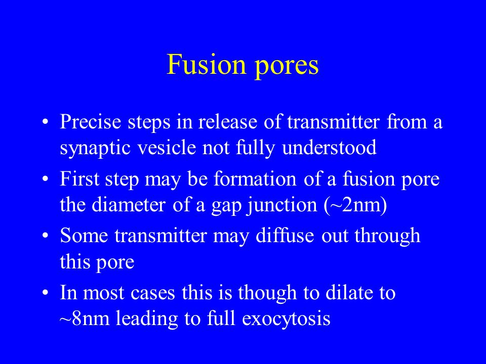 Fusion pores Precise steps in release of transmitter from a synaptic vesicle not fully understood First step may be formation of a fusion pore the diameter of a gap junction (~2nm) Some transmitter may diffuse out through this pore In most cases this is though to dilate to ~8nm leading to full exocytosis