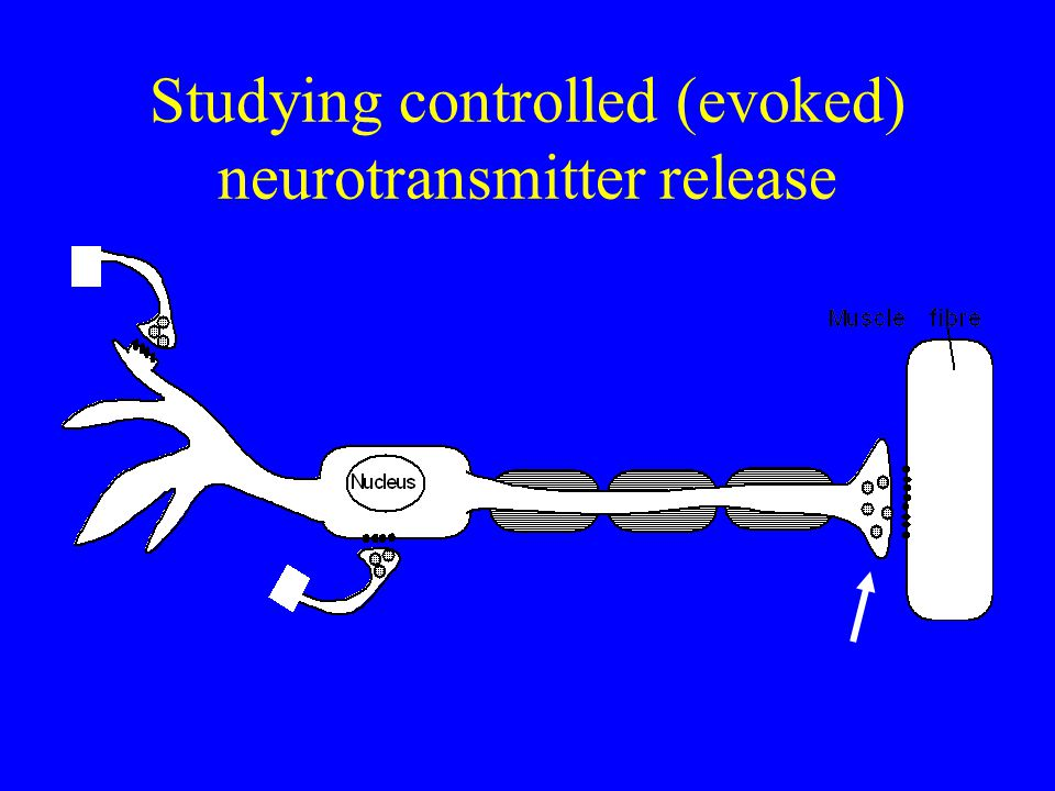 Studying controlled (evoked) neurotransmitter release