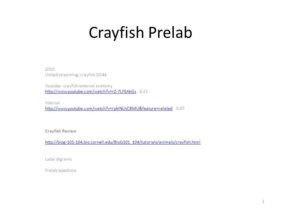 Crayfish Prelab 2010 United Streaming Crayfish 1044 Youtube