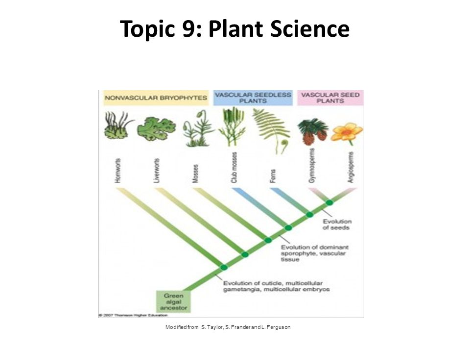 Topic 9: Plant Science Modified from S. Taylor, S. Frander and L. Ferguson