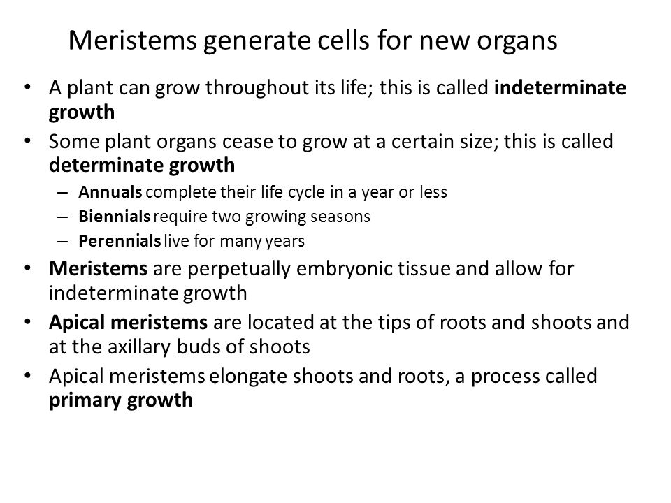 Meristems generate cells for new organs A plant can grow throughout its life; this is called indeterminate growth Some plant organs cease to grow at a certain size; this is called determinate growth – Annuals complete their life cycle in a year or less – Biennials require two growing seasons – Perennials live for many years Meristems are perpetually embryonic tissue and allow for indeterminate growth Apical meristems are located at the tips of roots and shoots and at the axillary buds of shoots Apical meristems elongate shoots and roots, a process called primary growth