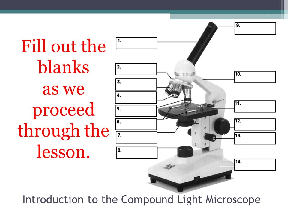 Light microscope diagram fill blank diy enthusiasts wiring diagrams introduction to the compound light microscope chuck hesbacker april rh slideplayer com a diagram of microscope parts labeled microscope diagram ccuart Choice Image