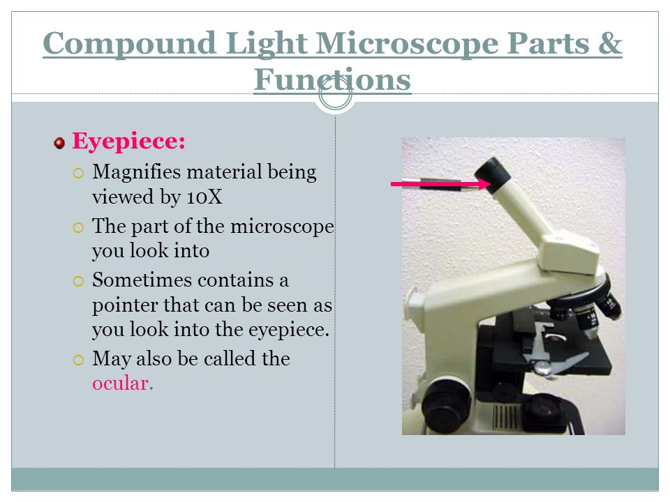 Microscope Lab Objectives Identify The Parts Of Dissecting And