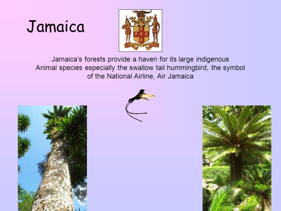 Luscious Caribbean Dominic A Montserrat Suriname Antigua Barbuda
