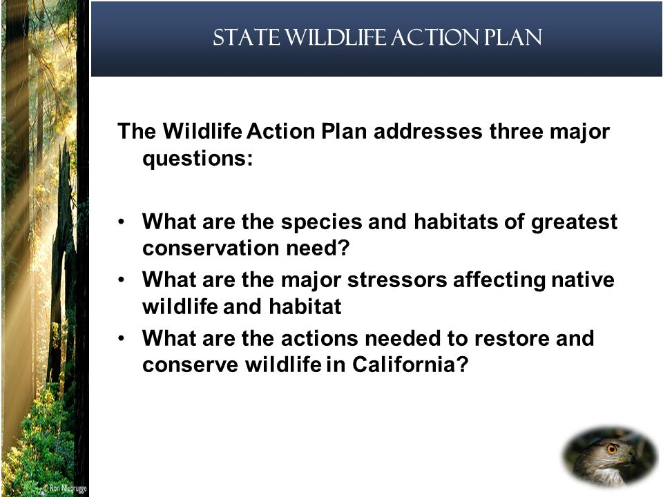 11 State Wildlife Action Plan The Wildlife Action Plan addresses three major questions: What are the species and habitats of greatest conservation need.