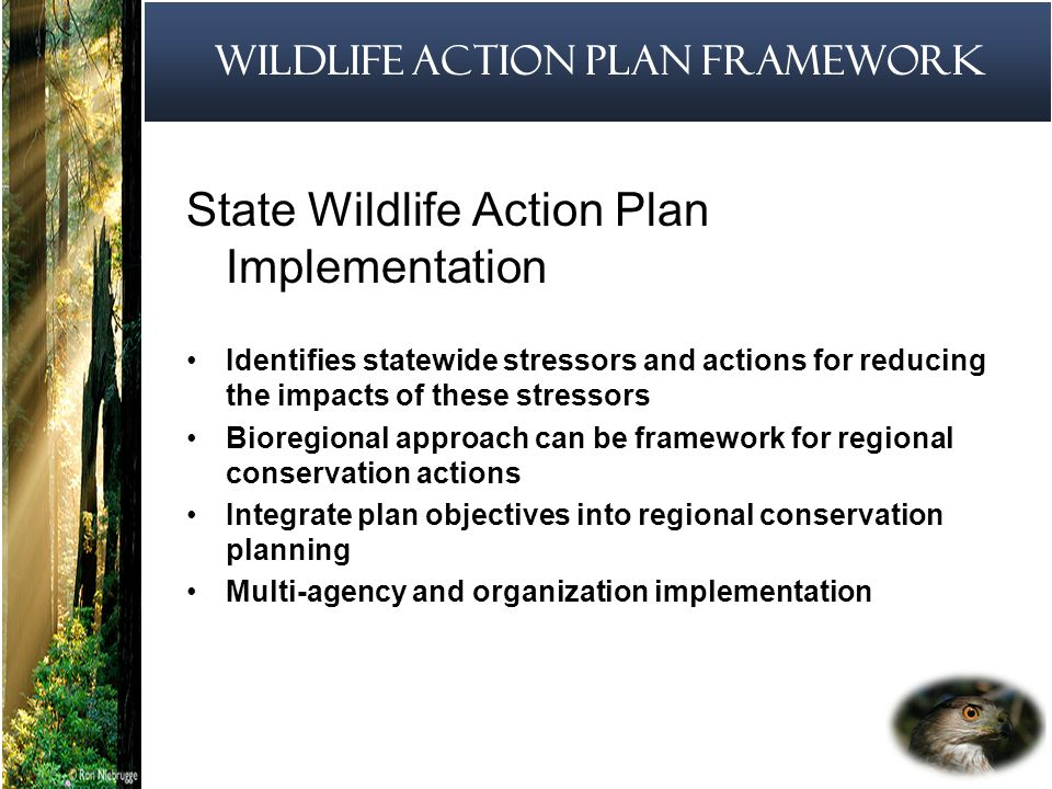 12 State Wildlife Action Plan Implementation Identifies statewide stressors and actions for reducing the impacts of these stressors Bioregional approach can be framework for regional conservation actions Integrate plan objectives into regional conservation planning Multi-agency and organization implementation Wildlife Action Plan Framework