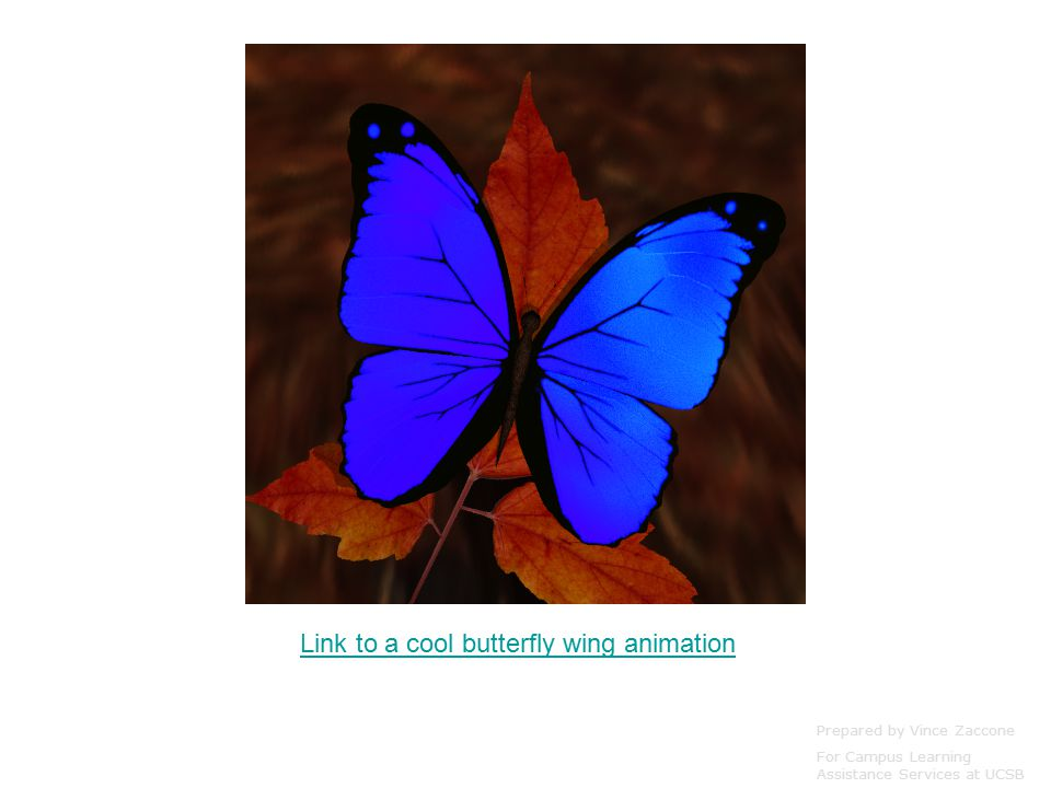 Link to a cool butterfly wing animation Prepared by Vince Zaccone For Campus Learning Assistance Services at UCSB