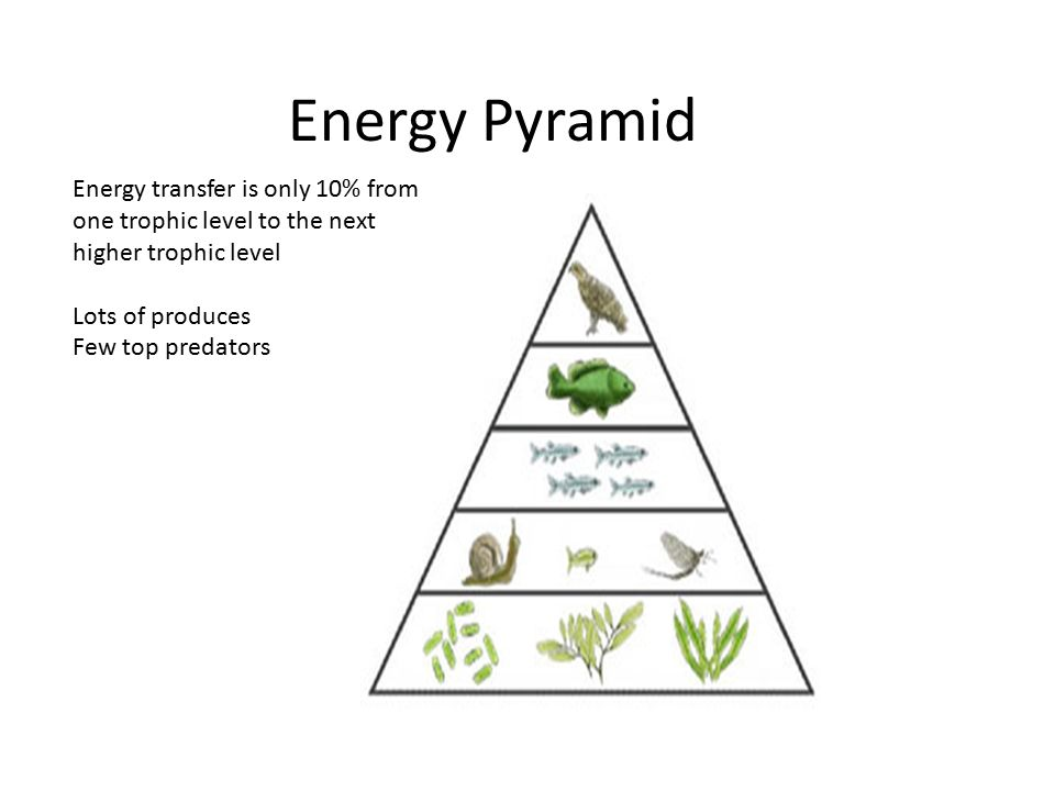 Food Webs and Energy Pyramids  Objectives Identification of