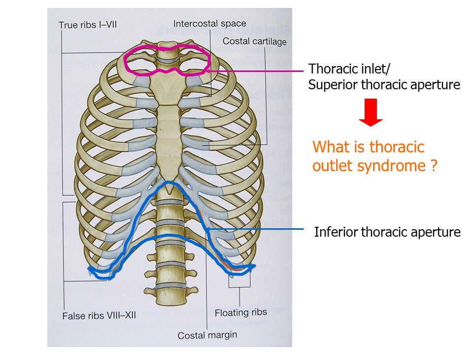 Mediastinum and Heart Sanjaya Adikari Department of Anatomy. - ppt ...