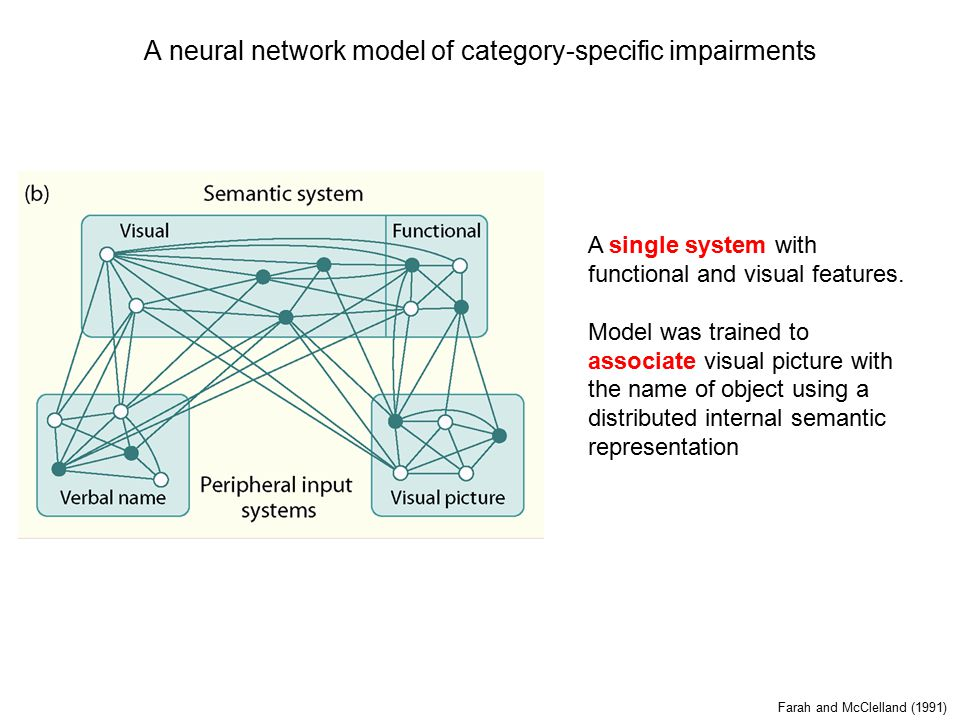 A neural network model of category-specific impairments Farah and McClelland (1991) A single system with functional and visual features.