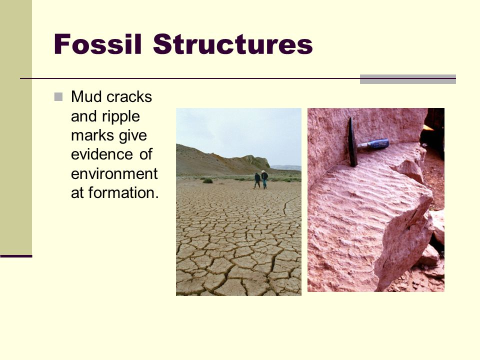 Fossil Structures Mud cracks and ripple marks give evidence of environment at formation.