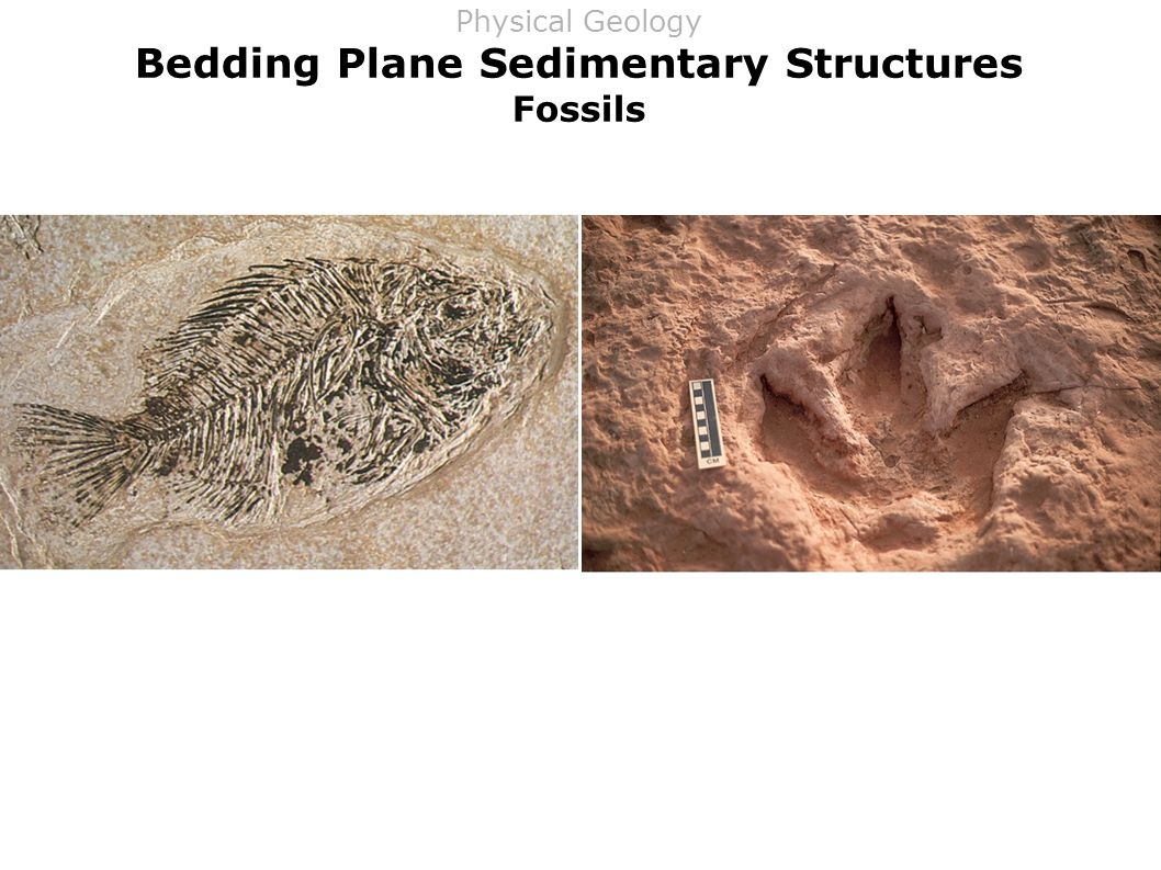 Bedding Plane Sedimentary Structures Fossils Physical Geology