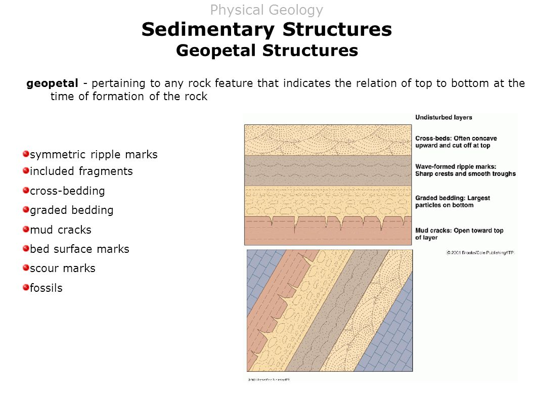 Sedimentary Structures Geopetal Structures geopetal - pertaining to any rock feature that indicates the relation of top to bottom at the time of formation of the rock symmetric ripple marks included fragments cross-bedding graded bedding mud cracks bed surface marks scour marks fossils Physical Geology