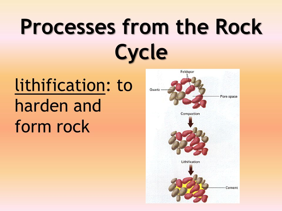 Processes from the Rock Cycle lithification: to harden and form rock