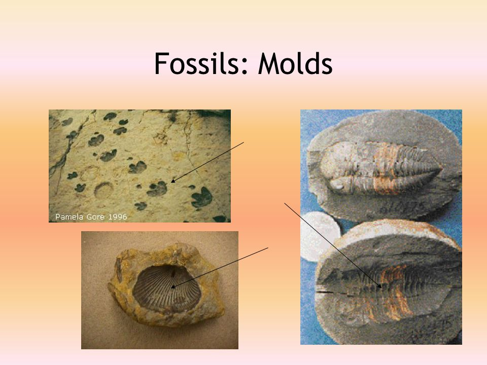 Fossils: Molds