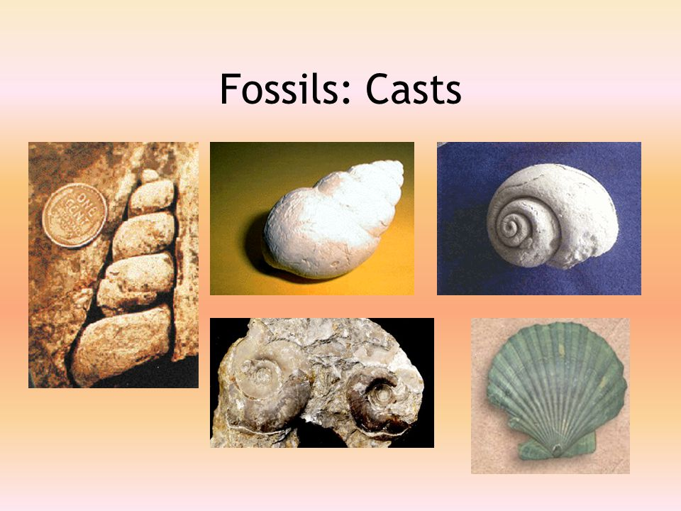 Fossils: Casts