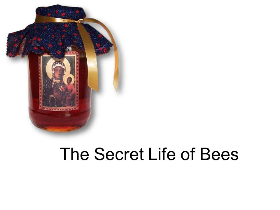 secret life of bees time period
