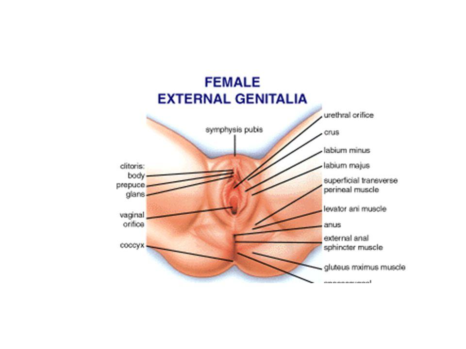 Female sex organs stimulate techniques