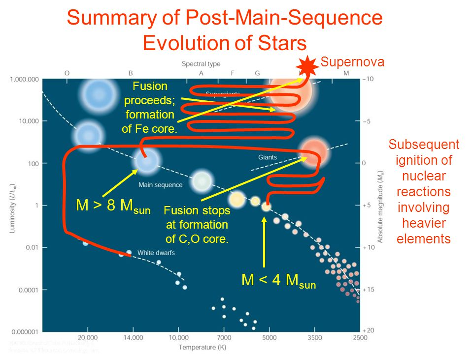 Summary of Post-Main-Sequence Evolution of Stars M > 8 M sun M < 4 M sun Subsequent ignition of nuclear reactions involving heavier elements Fusion stops at formation of C,O core.