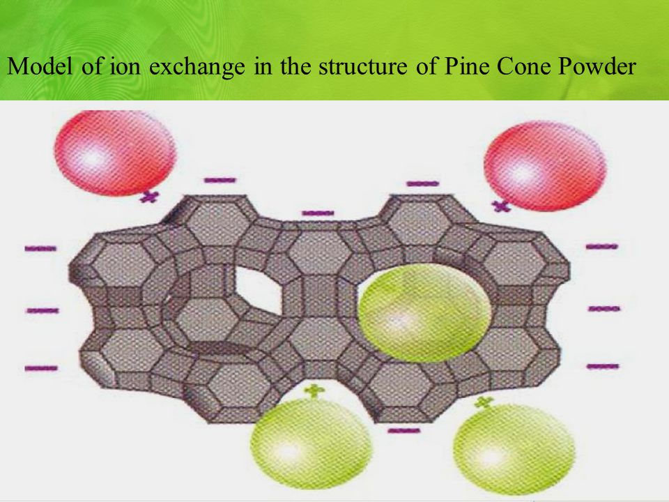 Мodel of ion exchange in the structure of Pine Cone Powder