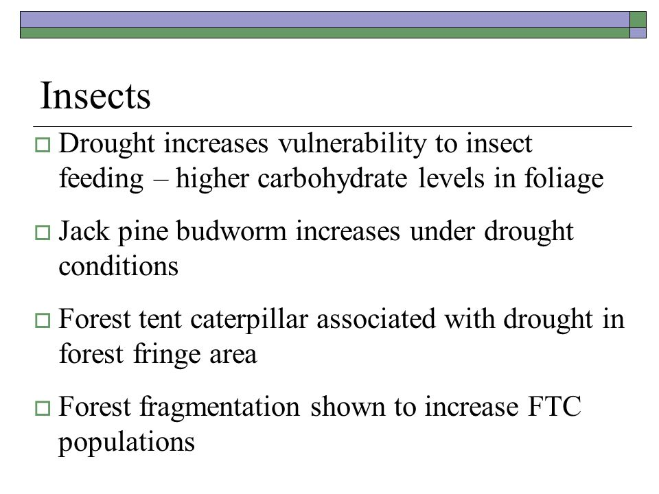 Insects  Drought increases vulnerability to insect feeding – higher carbohydrate levels in foliage  Jack pine budworm increases under drought conditions  Forest tent caterpillar associated with drought in forest fringe area  Forest fragmentation shown to increase FTC populations