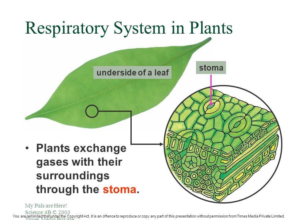 Respiration breathing respiration what is respiration it is the how do different animals breathe lungs eg ccuart Images