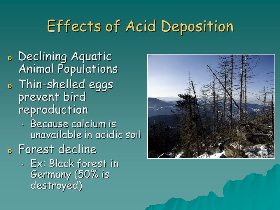 Effects of Acid Deposition o Declining Aquatic Animal Populations o Thin-shelled eggs prevent bird reproduction Because calcium is unavailable in acidic soil Because calcium is unavailable in acidic soil o Forest decline Ex: Black forest in Germany (50% is destroyed) Ex: Black forest in Germany (50% is destroyed)