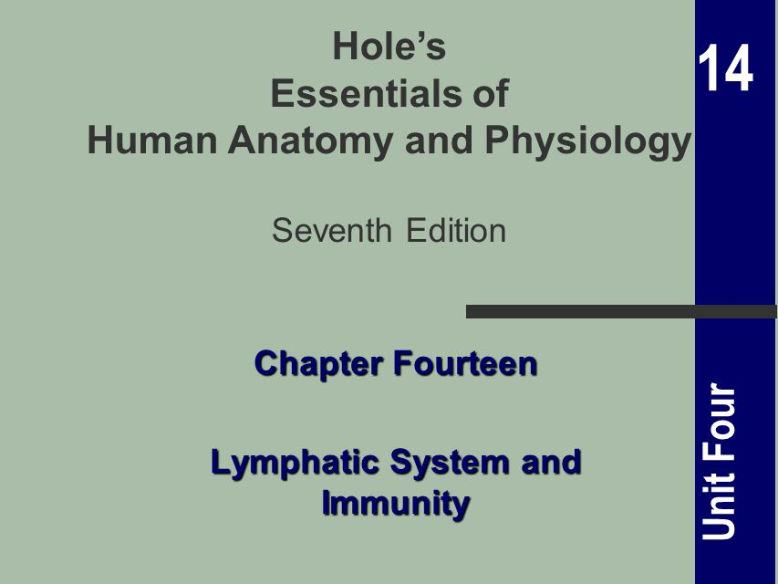 14 Unit Four Holes Essentials Of Human Anatomy And Physiology