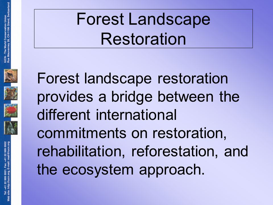 Forest Landscape Restoration Forest landscape restoration provides a bridge between the different international commitments on restoration, rehabilitation, reforestation, and the ecosystem approach.