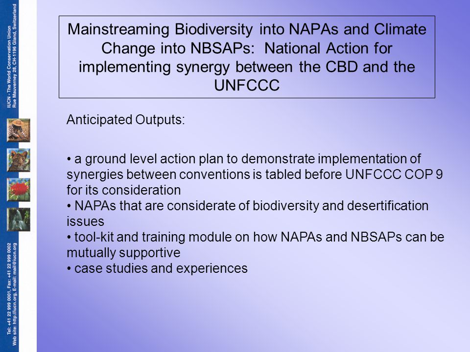 Mainstreaming Biodiversity into NAPAs and Climate Change into NBSAPs: National Action for implementing synergy between the CBD and the UNFCCC Anticipated Outputs: a ground level action plan to demonstrate implementation of synergies between conventions is tabled before UNFCCC COP 9 for its consideration NAPAs that are considerate of biodiversity and desertification issues tool-kit and training module on how NAPAs and NBSAPs can be mutually supportive case studies and experiences
