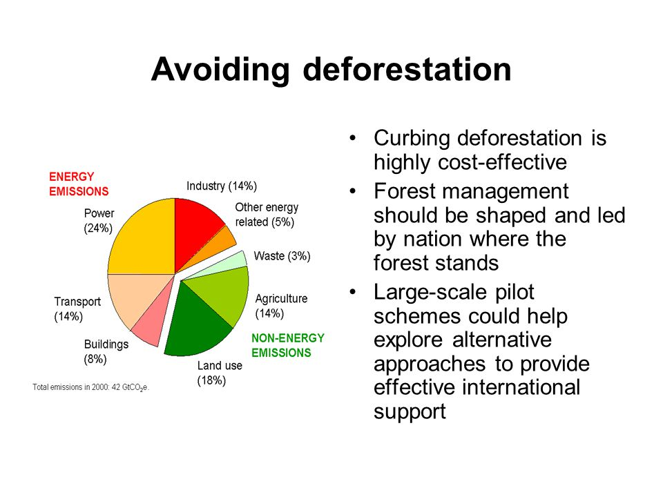 Avoiding deforestation Curbing deforestation is highly cost-effective Forest management should be shaped and led by nation where the forest stands Large-scale pilot schemes could help explore alternative approaches to provide effective international support