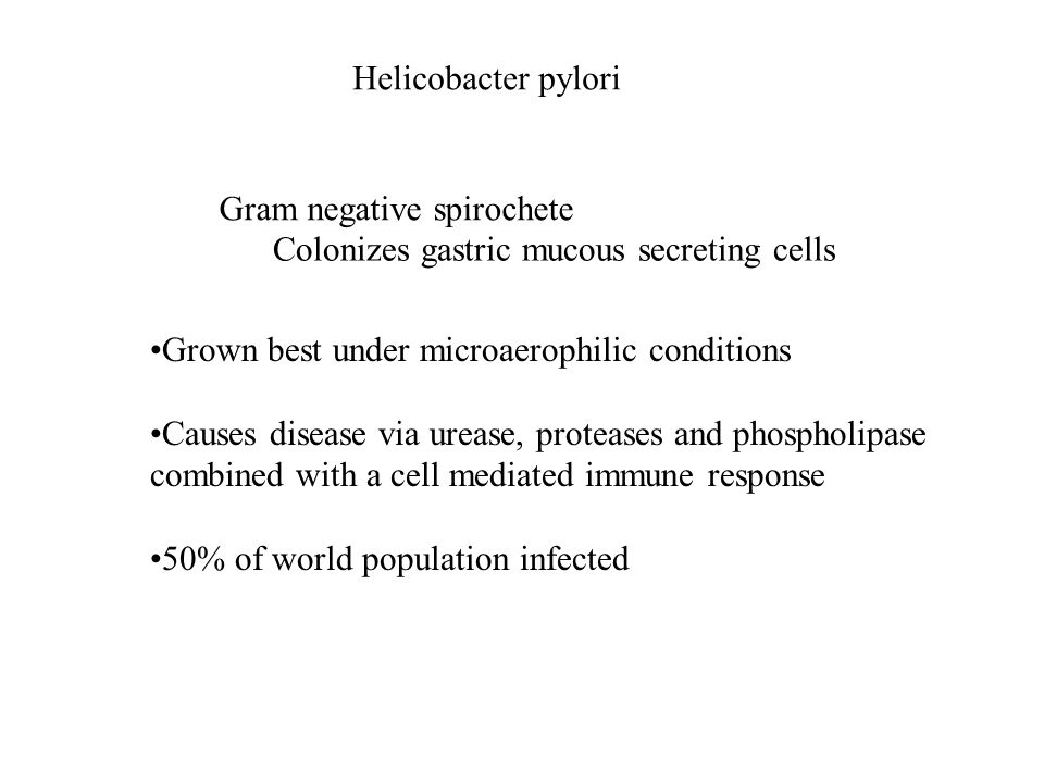Helicobacter pylori Gram negative spirochete Colonizes gastric mucous secreting cells Grown best under microaerophilic conditions Causes disease via urease, proteases and phospholipase combined with a cell mediated immune response 50% of world population infected