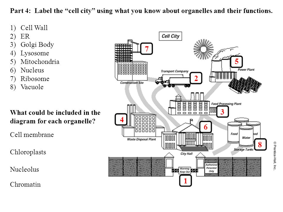 Protein Power How well can your class make proteins? Game created by ...