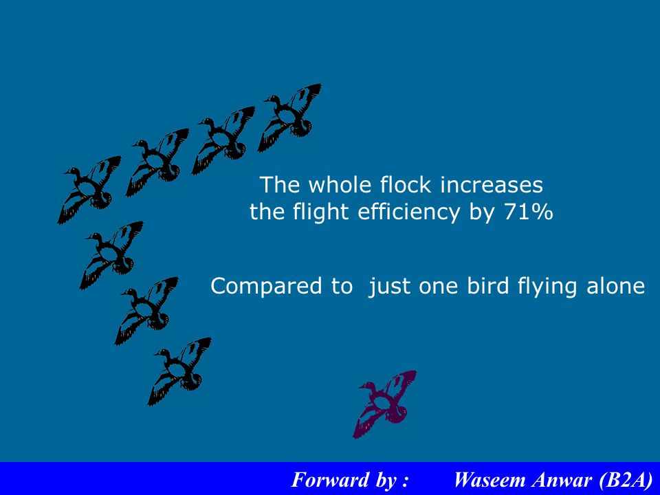 By flying in a V formation.... Forward by : Waseem Anwar (B2A)