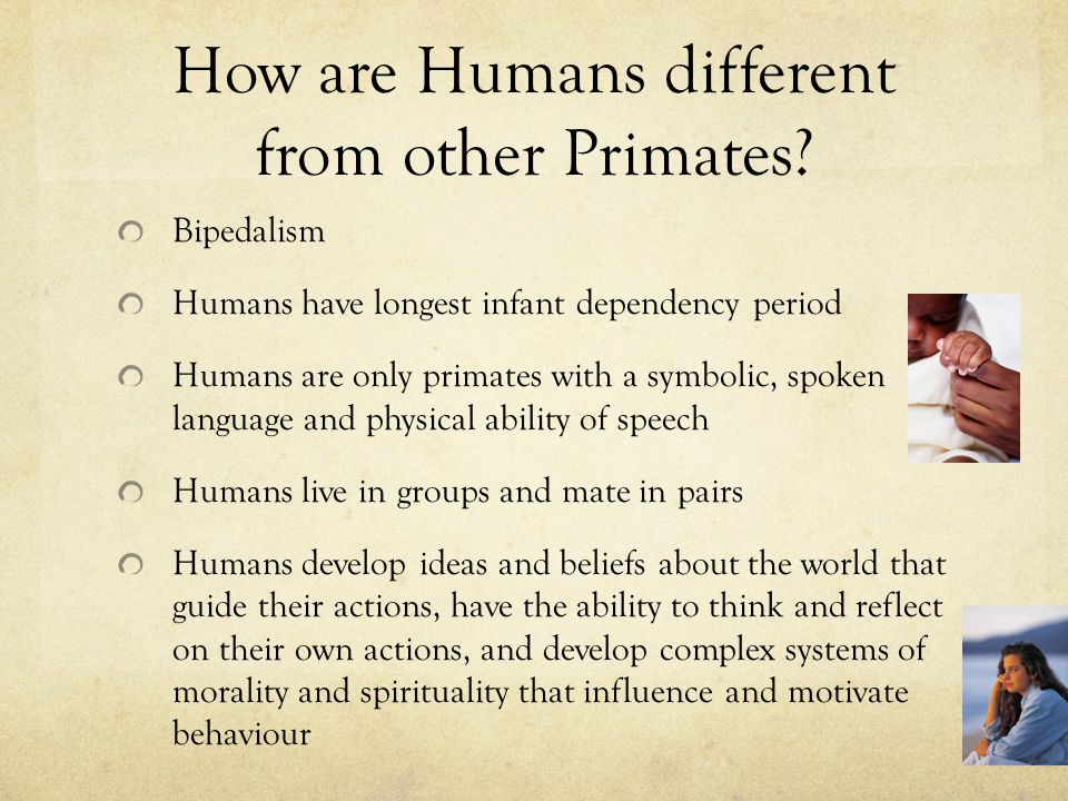 how humans are different from other primates In 1871 charles darwin surmised that humans were evolutionarily closer to the african apes than to any other species alive the recent sequencing of the gorilla, chimpanzee and bonobo genomes.