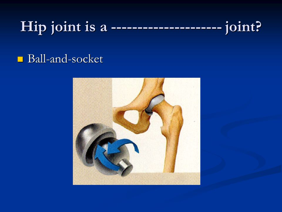 Hip joint is a joint Ball-and-socket Ball-and-socket