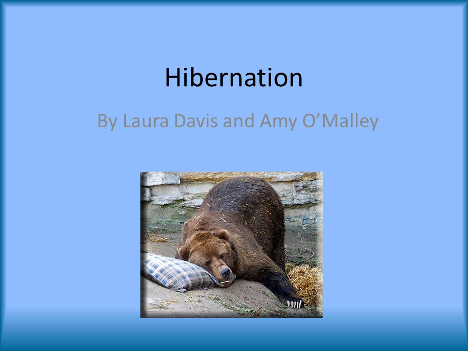 hibernation by laura davis and amy o malley preparation late summer rh slideplayer com summer hibernation animals summer hibernation chord