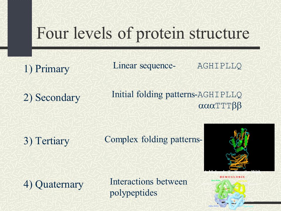Four levels of protein structure 1) Primary 2) Secondary 3) Tertiary 4) Quaternary Linear sequence- AGHIPLLQ Initial folding patterns- AGHIPLLQ  TTT  Complex folding patterns- Interactions between polypeptides