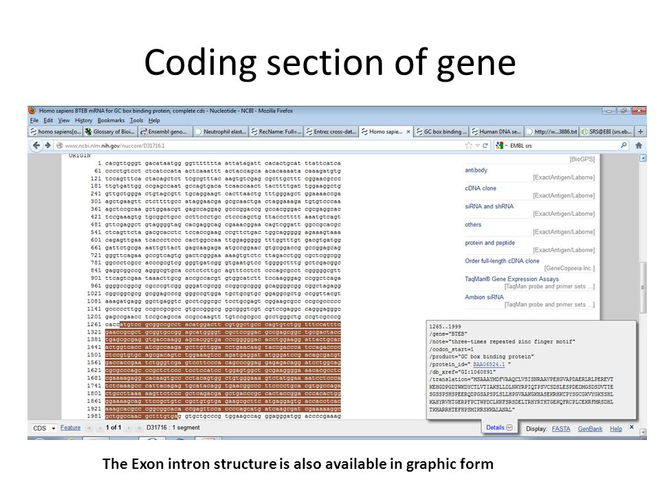 Coding section of gene The Exon intron structure is also available in graphic form