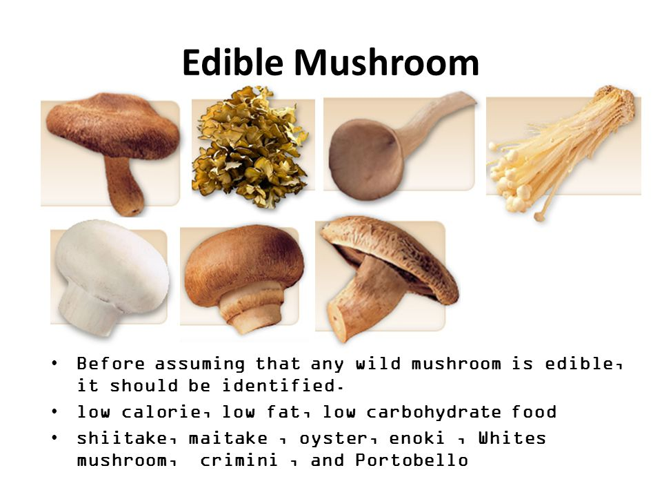 MUSHROOM A variety of gilled fungi, with or without stems