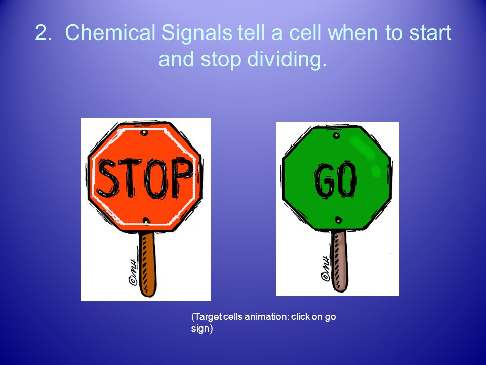 2. Chemical Signals tell a cell when to start and stop dividing.