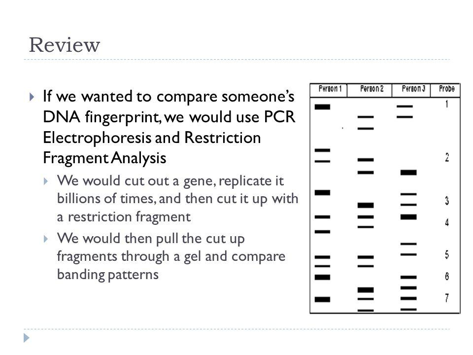 dna fingerprint analysis answer key