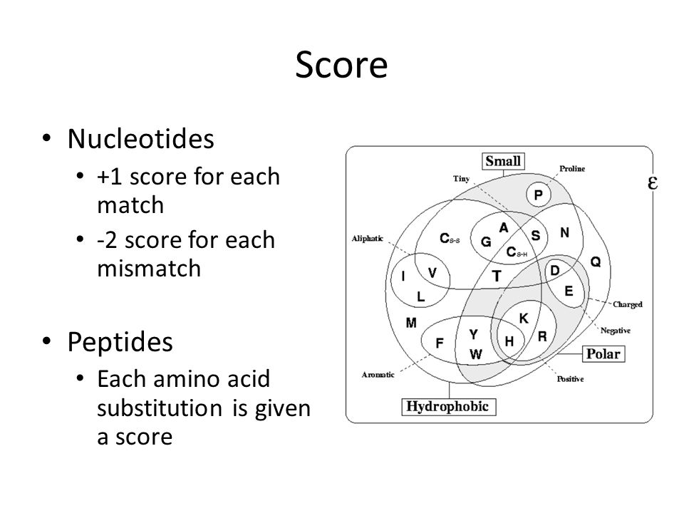 Score Nucleotides +1 score for each match -2 score for each mismatch Peptides Each amino acid substitution is given a score