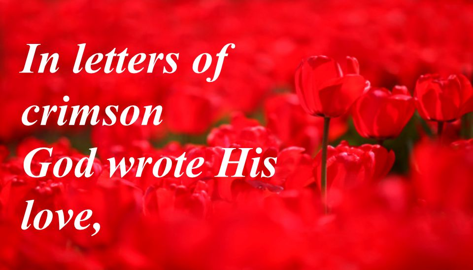 In letters of crimson God wrote His love,