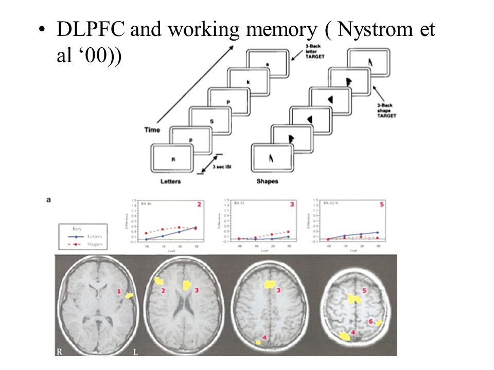 DLPFC and working memory ( Nystrom et al '00))